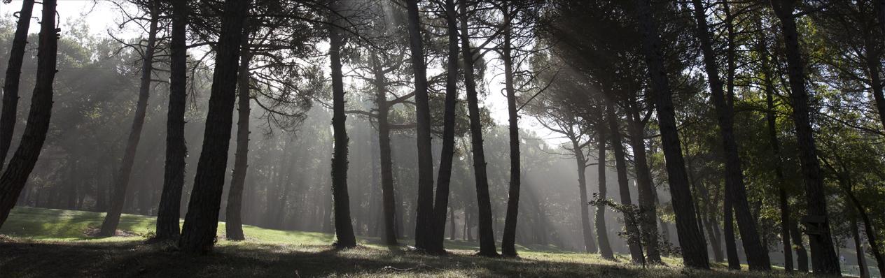 Bosc sota el sol