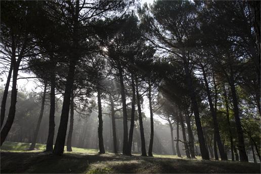 Bosc sota un sol intens